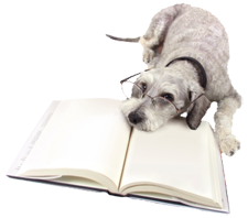 Image of a dog reading a book