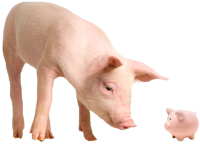 Image of a pig looking at a piggy bank